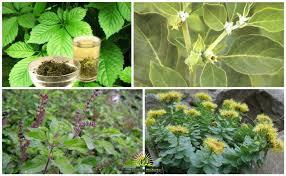 piante adattogene
